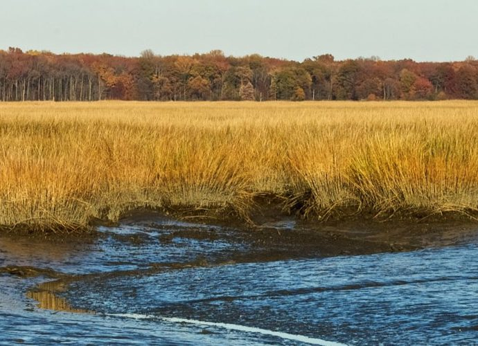Delaware Nature Centers & Birding